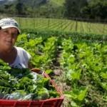 Cooperativismo ajudando o desenvolvimento sustentável do campo