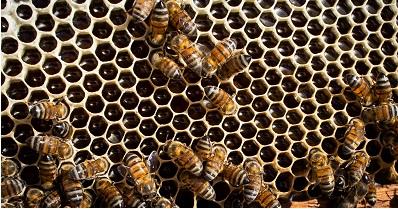 Abelha produz mel e ainda ajuda a manter o equilíbrio do ecossistema