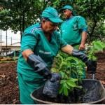 Plantio de árvores na capital alagoana visa a deixar a cidade mais sustentável