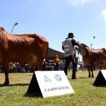 Associação dos Criadores de Alagoas (ACA) prepara nova edição com novidades para a pecuária alagoana