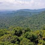 CPR Verde ajudará a preservar o meio ambiente